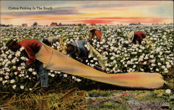Cotton Picking in the South Black Americana