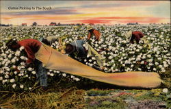 Cotton Picking in the South