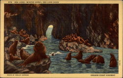 Sea Lions (Winter Herd), Sea Lion Caves