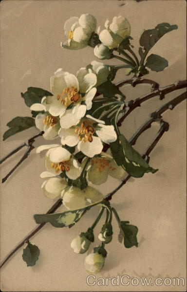 Sprig of White Flowers C. Klein