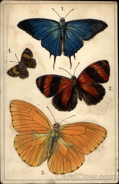 Four Butterfly Specimens