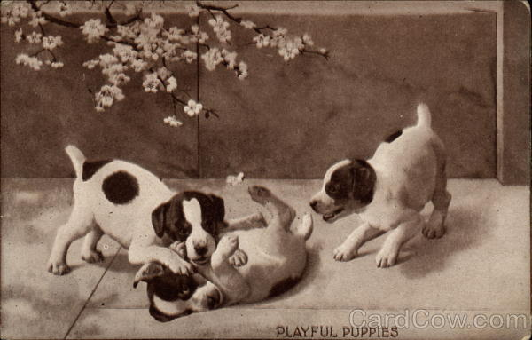 Playful Puppies Dogs