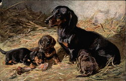 Daschund and Puppies