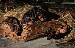Dachshund with puppies in a basket
