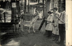 The Donkeys, Pequot Park
