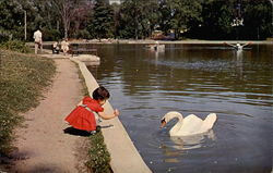 Louise and the Swan