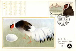 The Brown-Eared Pheasant Postcard