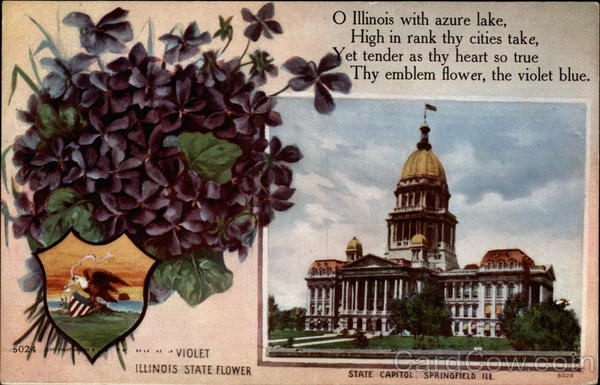 Illinois state flower and state capitol Springfield