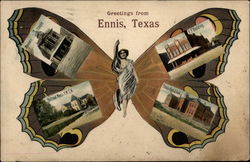 Greetings from Ennis Butterfly