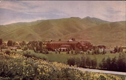 Early Summer in Sun Valley