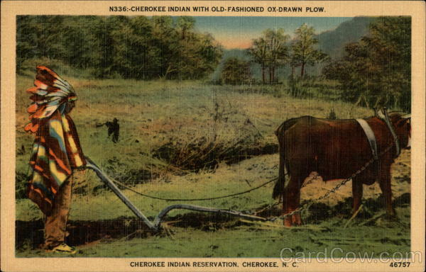 Vintage christmas postcard old fashioned christmas - Cherokee Indian With Old Fashioned Ox Drawn Plow Cherokee Indian