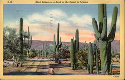 Giant, Sahuaros, a Road on the Desert in Arizona