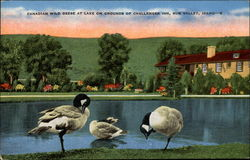 Canadian Wild Geese at lake on grounds of Challenger Inn