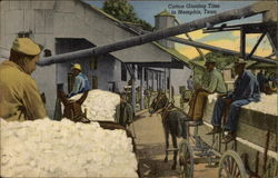 Cotton Ginning Time