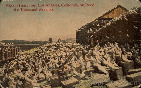 Pigeon Farm, near Los Angeles, California, on Road of a Thousand Wonders