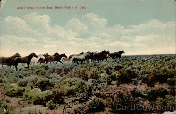 Wild horses on the sage brush plains of Idaho