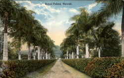 Royal Palm - Tree Lined Path
