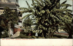 Banana Tree, Southern California Residence