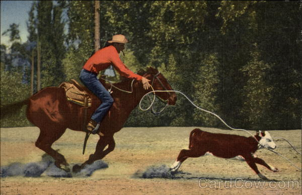 Calf Roping in the Southwest Cowboy Western