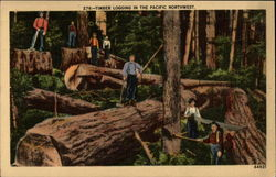 Timber Logging In The Pacific Northwest