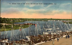 Sponge Fleet at the Docks and Anclote River