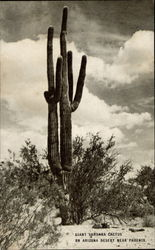 Giant Sahuara Cactua on Arizona Desert Near Phoenix