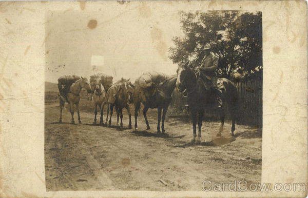 Man in Uniform with Horses Hutton California People in Uniform