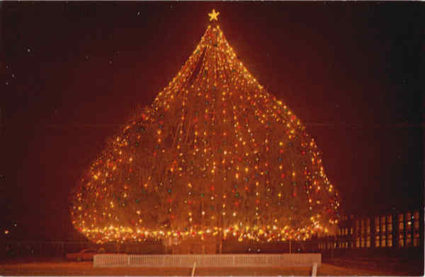 World's Largest Living Christmas Tree Wilmington, NC