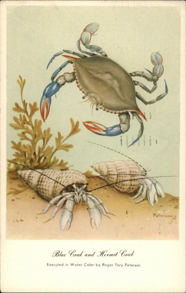 Blue Crab and Hermit Crab Roger Tory Peterson Fish