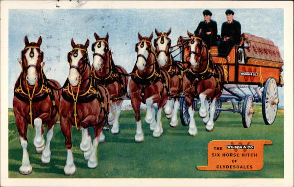 The Six Horse Hitch of Clydesdales Chicago Illinois