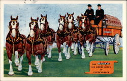 The Six Horse Hitch of Clydesdales Postcard