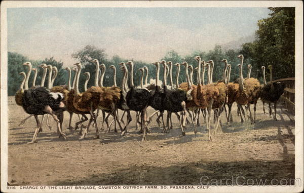 Charge of the Light Brigade, Cawston Ostrich Farm S. Pasadena California