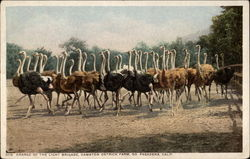 Charge of the Light Brigade, Cawston Ostrich Farm Postcard