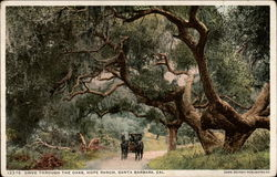 Drive Through the Oaks, Hope Ranch