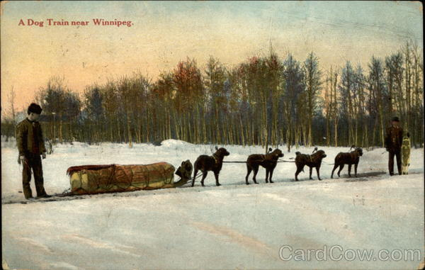 A dog train near Winnipeg Canada Manitoba