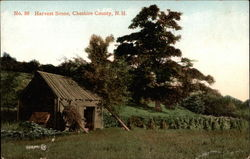 Harvest Scene, Cheshire County, N.H Postcard