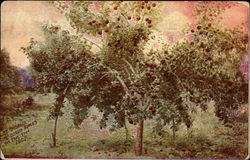 22 bushels Rome Beauty apples on this tree, 1907