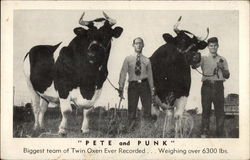 """Pete and Punk"" - Biggest Team of Twin Oxen Ever Recorded"