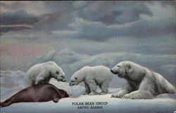 Polar Bear Group