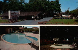 Safari Garden Motel Postcard