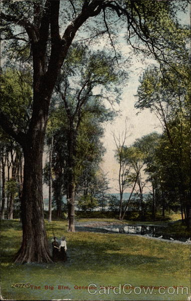The Big Elm, Genesee Valley Park Rochester New York
