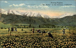 "Picking Poppies, ""Mt. Baldy in the Distance"