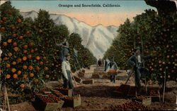 Oranges and Snowfields, California