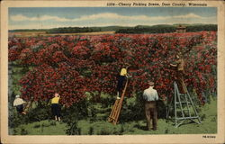 Cherry Picking Scene