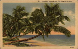 Cocoanut trees along the coast of Florida