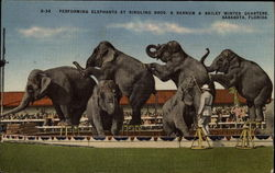 Performing Elephants at Ringling Bros & Barnum Bailey Winter Headquarters
