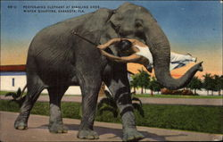 Performing Elephant at Ringling Bros. Winter Quarters