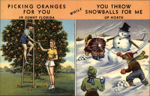 Picking Oranges For You Florida