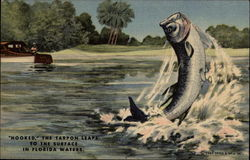 """Hooked"" the Tarpon Leaps to the Surface in Florida Waters"