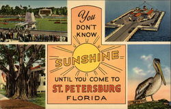 You Don't Know Sunshine Until You Come to St. Petersburg